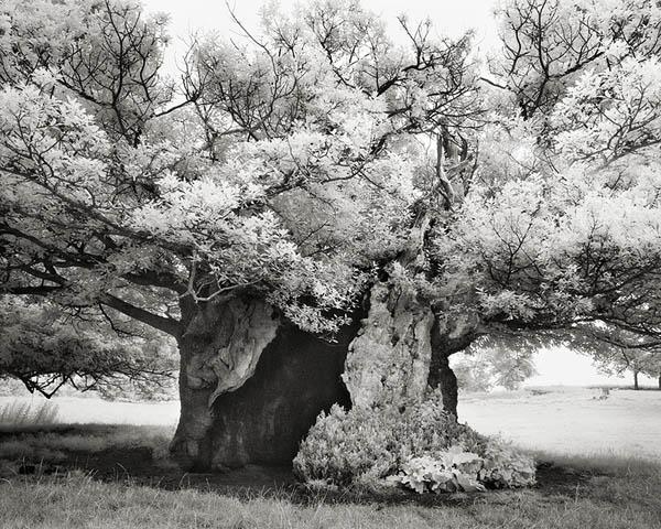 Величественные деревья в проекте Бет Мун