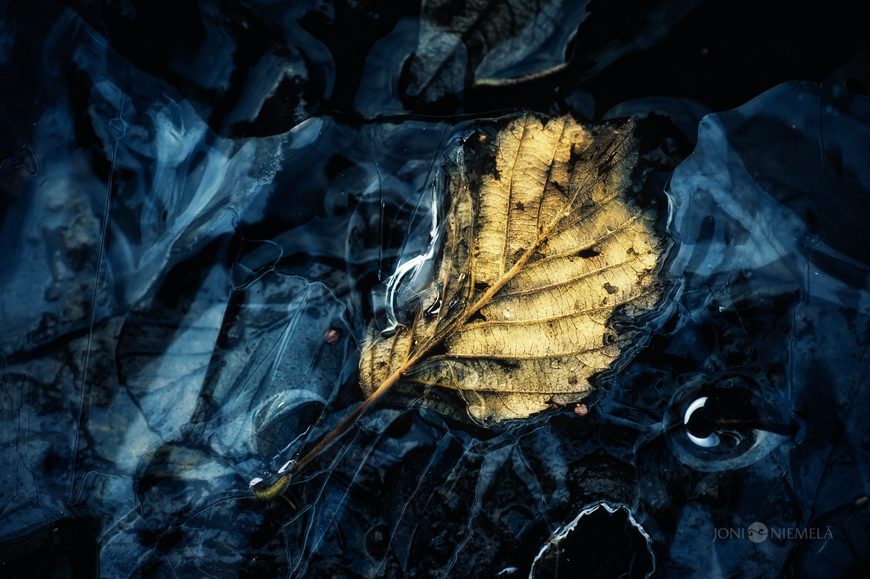Макро-фотографии от Джони Ниемела