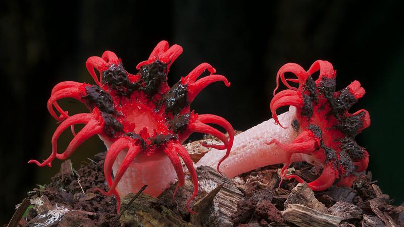Мир грибов в фотопроекте Стива Аксфорда