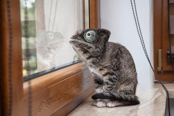 Гибридные животные из вселенной Photoshop