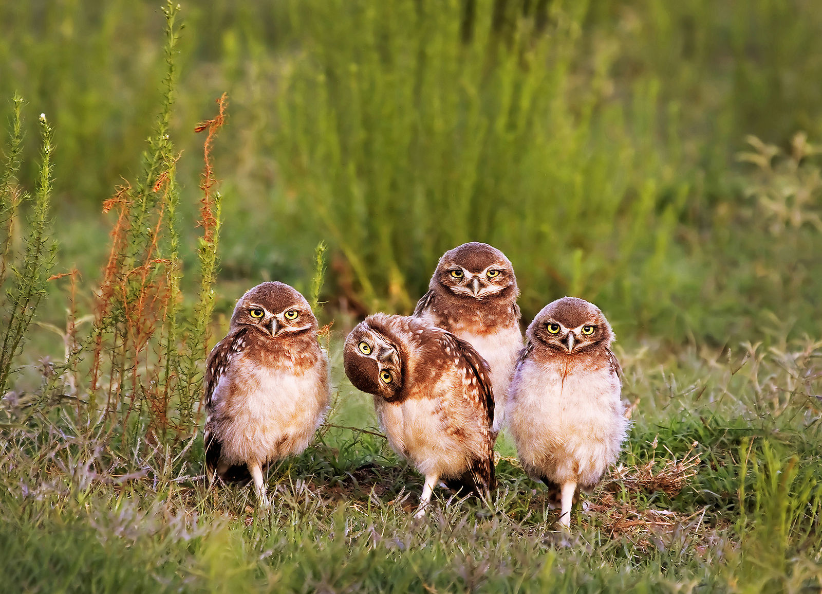 Comedy Wildlife Photography Awards 2016