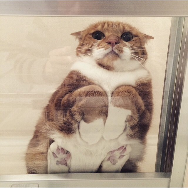 Смешные кошки на стекле