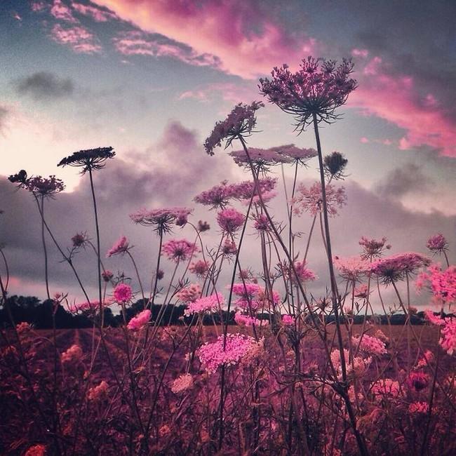Фотографии на Айфон от Мелиссы Винсент