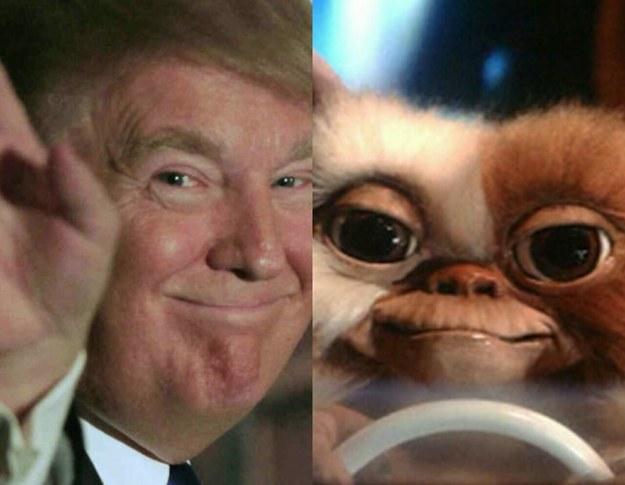 Гремлин Гизмо и Дональд Трамп