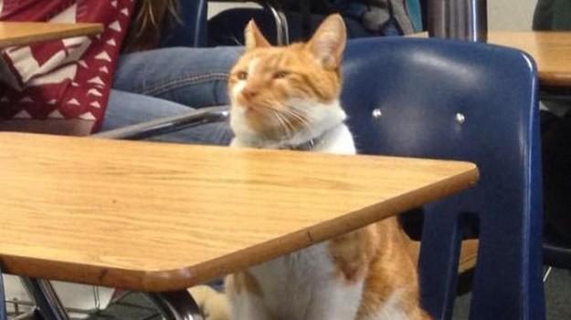 Этот кот посещал школу настолько часто, что его сделали реальным студеном