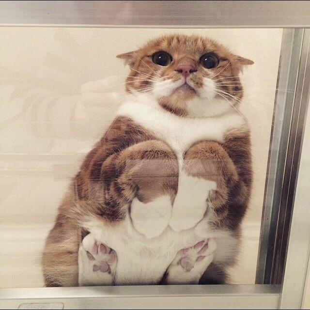 Жутко милые и смешные кошки на стекле
