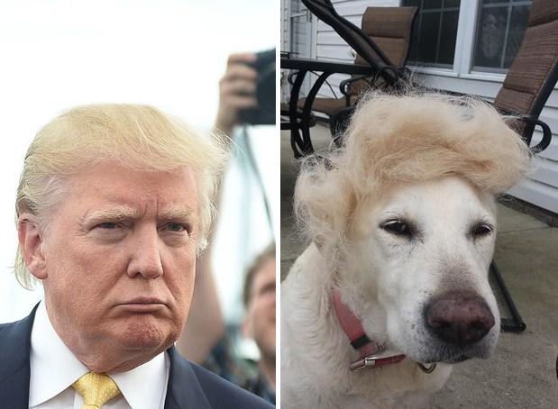 Собака и Дональд Трамп