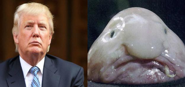 Рыба-капля и Дональд Трамп