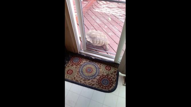 Очаровательные черепахи умнее, чем мы думали
