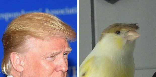 Птица и Дональд Трамп