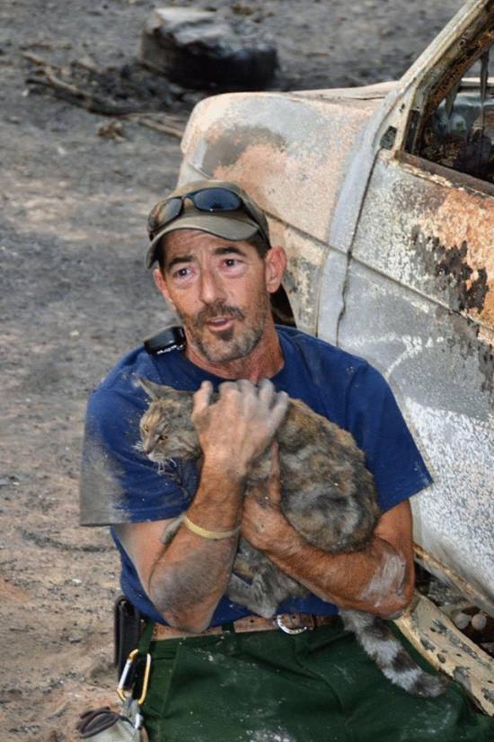 Кошка чудом спаслась после ужасного пожара