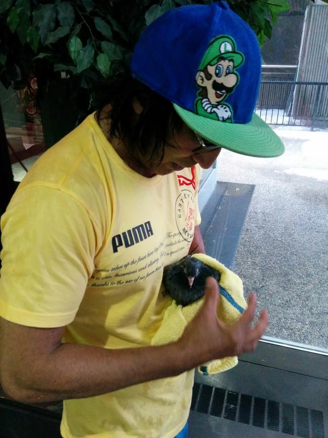 Человек спас голубя