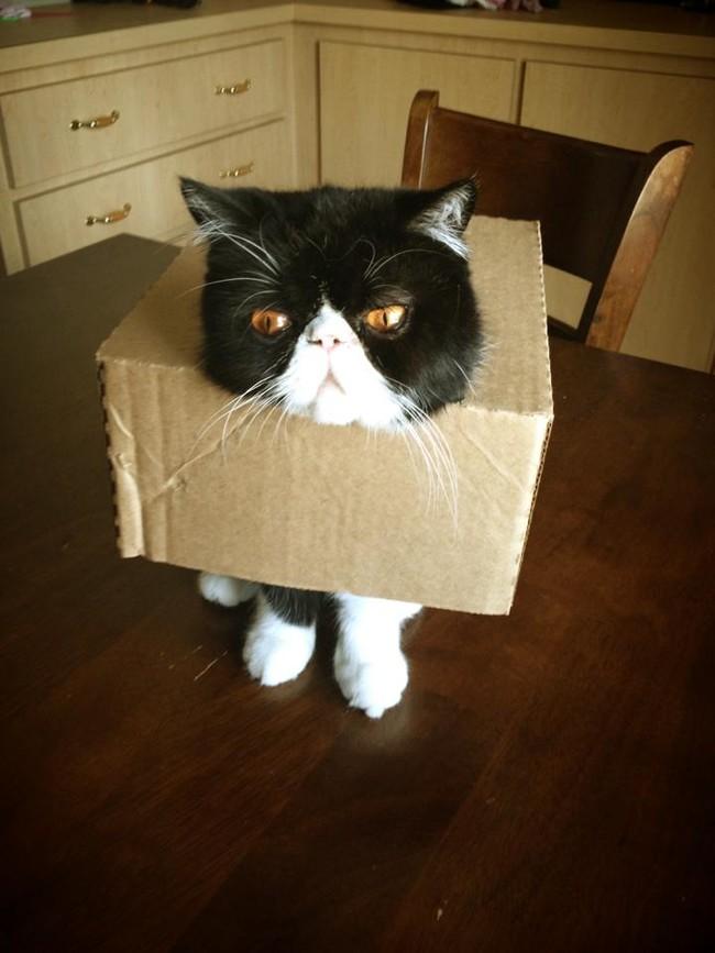 Весёлые фейлы котов
