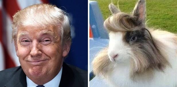 Кролик и Дональд Трамп