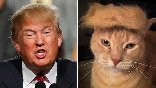 Кот и Дональд Трамп