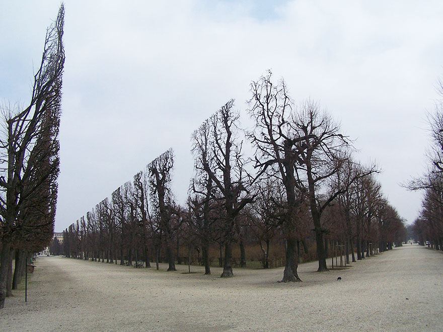 Деревья в парке Шенбрунн