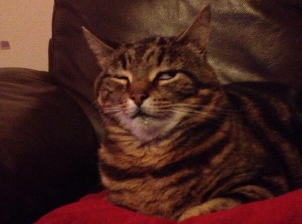 70 котов, доказывающих, что у них тоже есть эмоции
