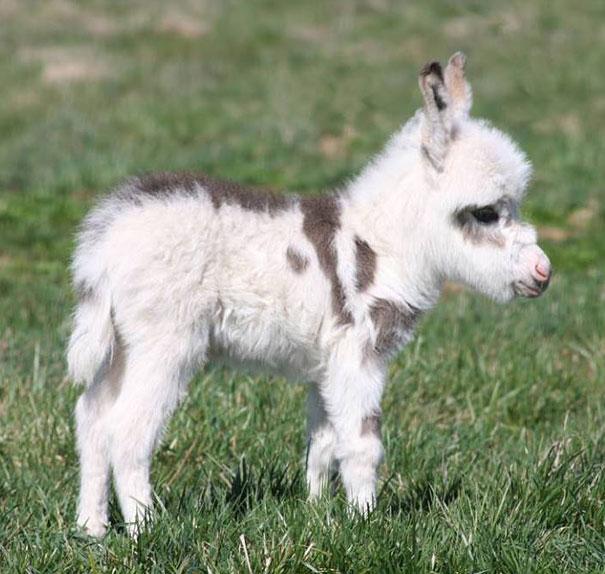 Самые милые детёныши животных
