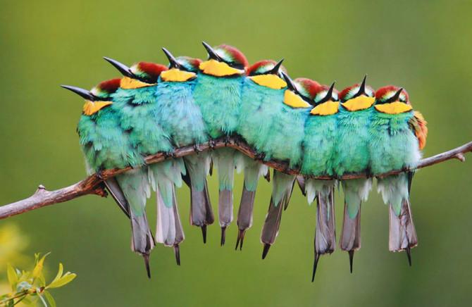 Эти птицы прижимаются друг к другу для сохранения тепла