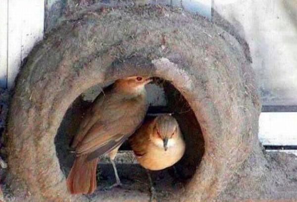 Процесс создания гнезда птицей