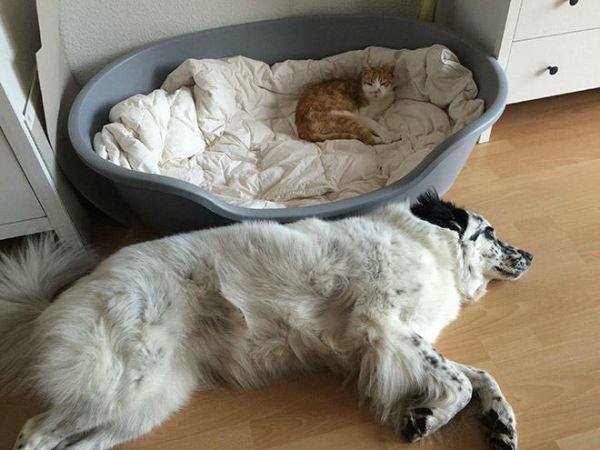 Кошки, которые нагло украли места у собак