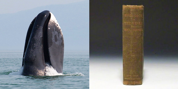 кит и книга Моби Дик
