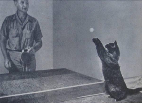 Дагвуд, пинг-понг кот (Dagwood)