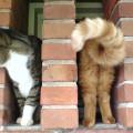 50 фотографий кошек, сделанных в нужный момент