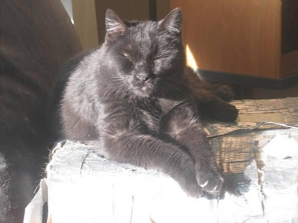 Блэки, говорящий кот (Blackie)