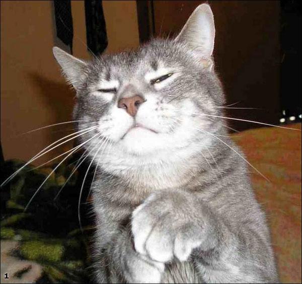 Картинки коты эмоции