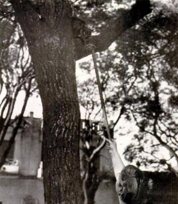 Минча, кошка на дереве (Mincha)