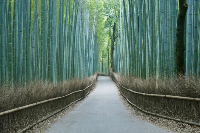 Сказочный бамбуковый лес в Японии