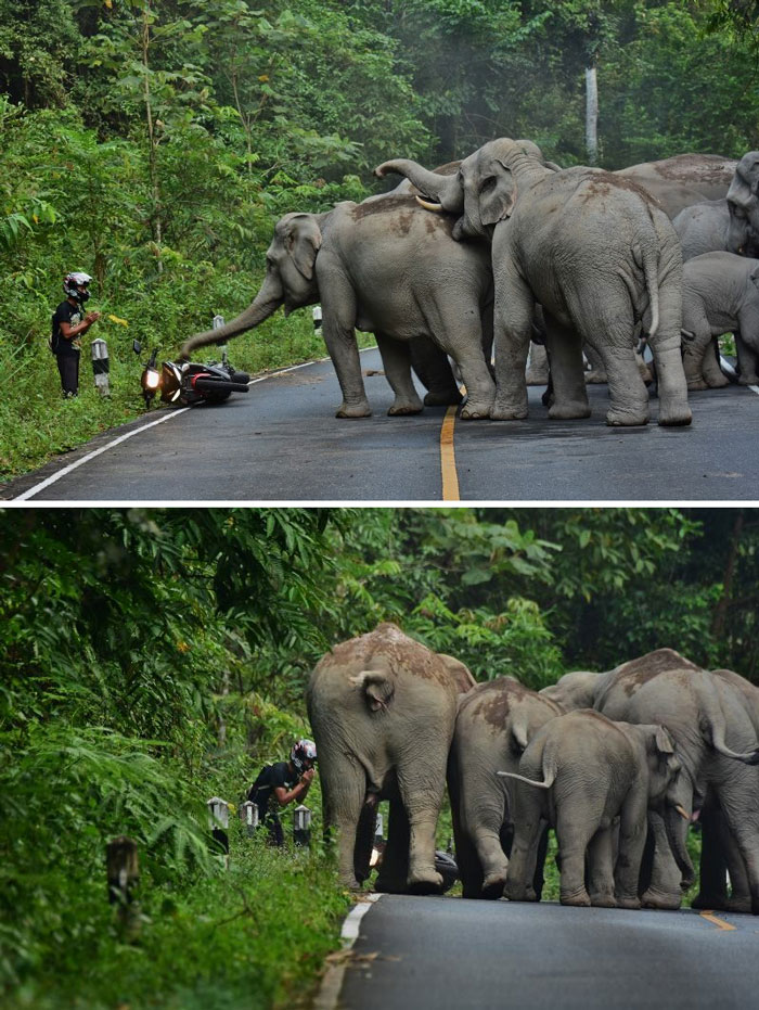 man-apologizes-elephants-khao-yai-national-park-thailand-3