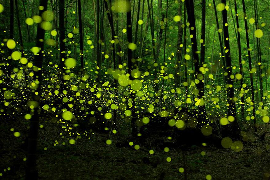 Таинственный лес Японии