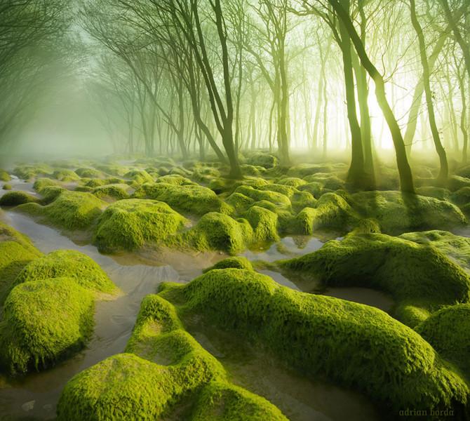 Таинственные леса, в которых каждый хотел бы заблудиться