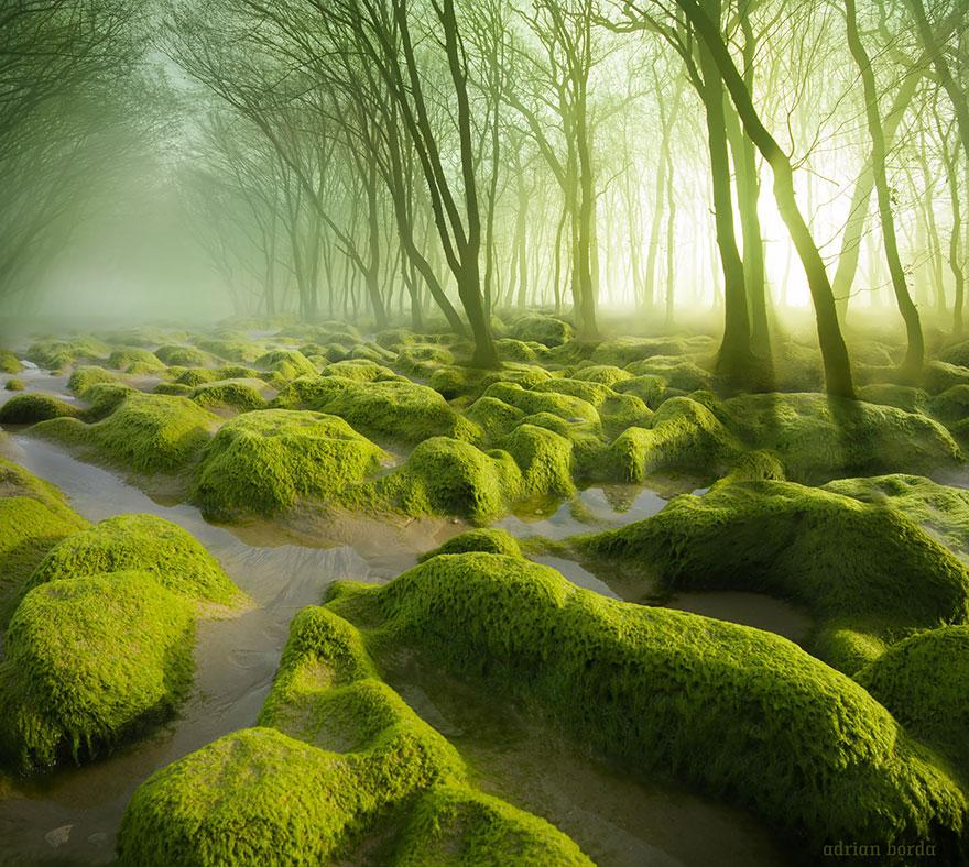 Таинственный лес Румынии