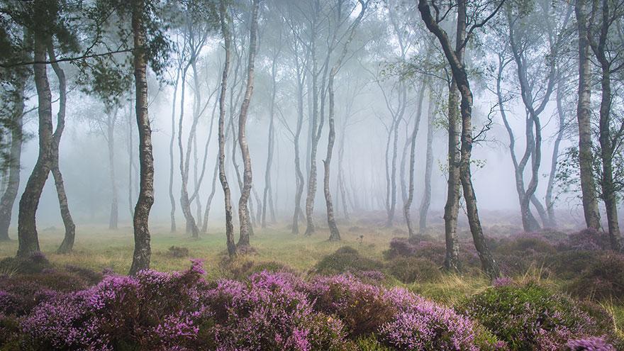 Таинственный лес Великобритании