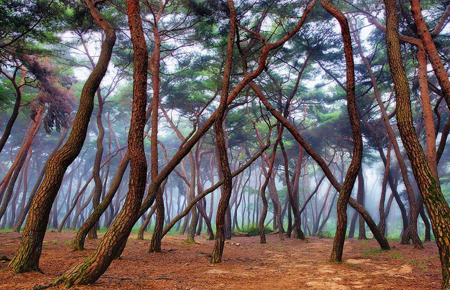 Неизвестный таинственный лес