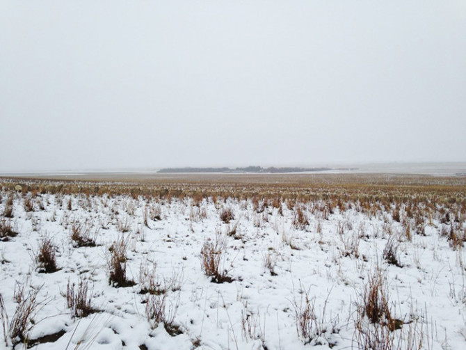 На этой фотографии 550 овец. Можете ли вы их найти?