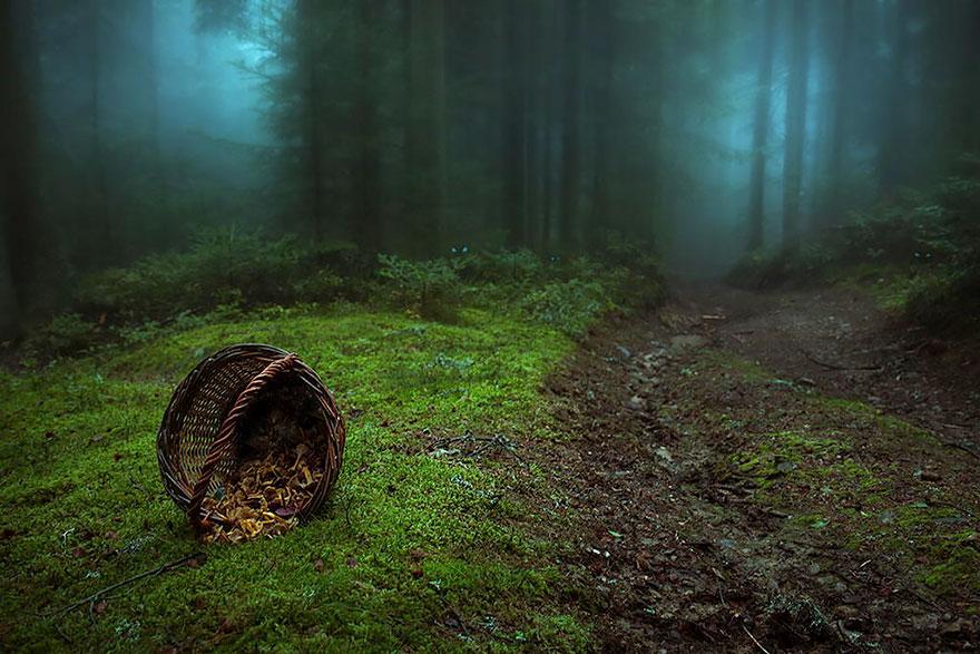 Таинственный лес Франции