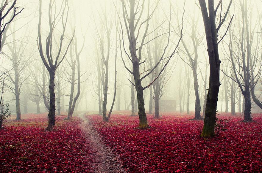 Таинственный лес Италии
