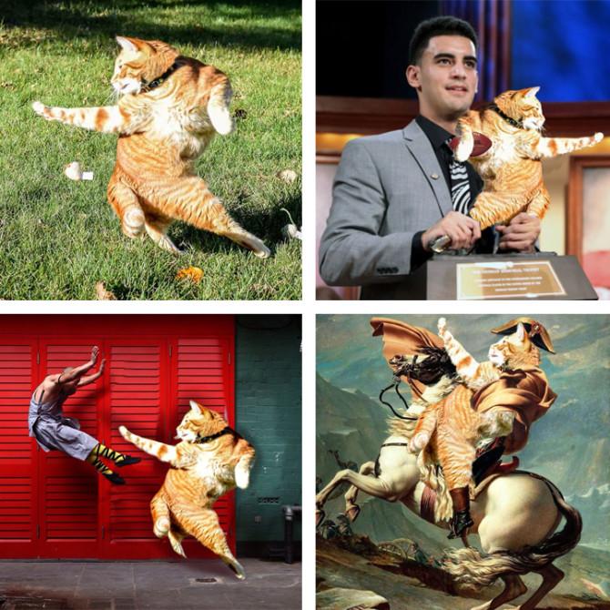 Интернет-пользователи переосмыслили фотографию гибкого кота в весёлой Фотошоп-битве