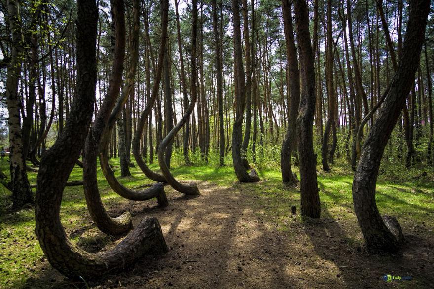 Таинственный лес Польши