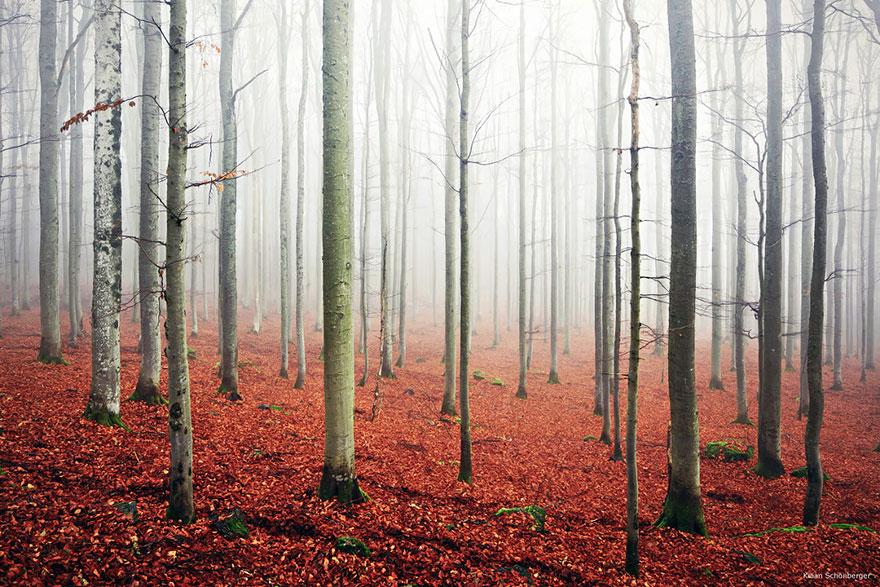 Таинственный лес Германии