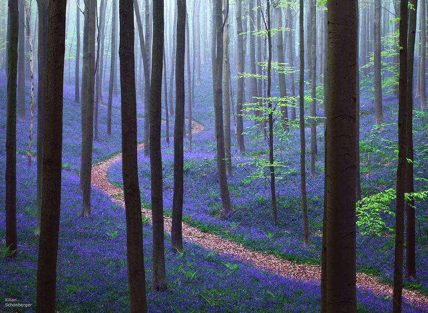 Таинственный лес Бельгии