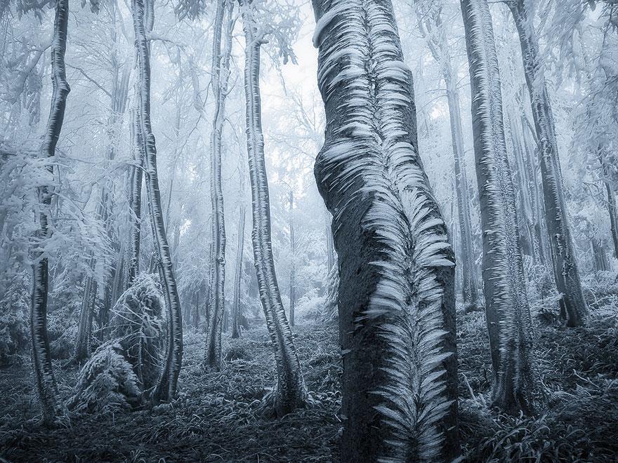 Таинственный лес Чехии