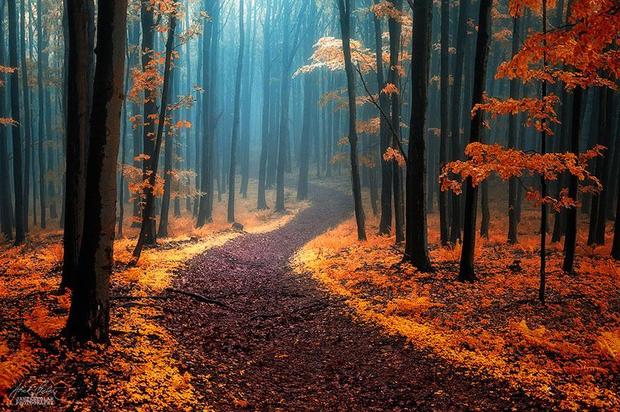 Таинственный лес Белых Карпат