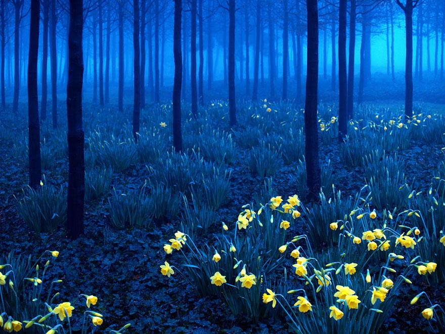 Таинственный лес Англии