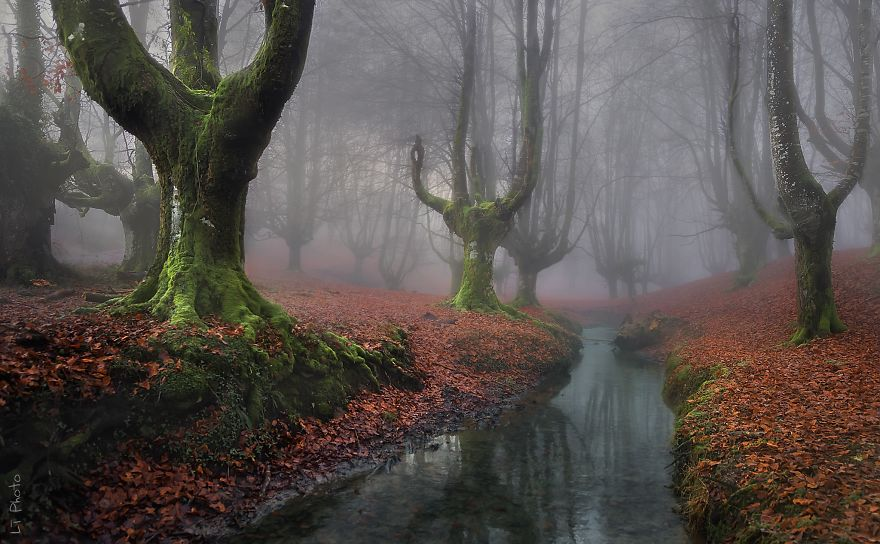 Таинственный лес Испании