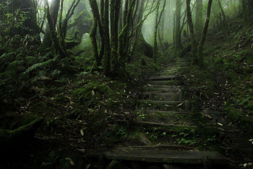 Таинственный лес Тайваня